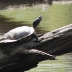 Not a birdwatcher? You could monitor turtles!